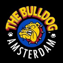bulldog black